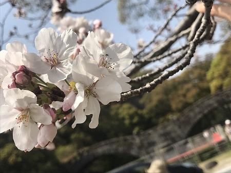 【諫早中央イクシア】お花見の季節ですね~♬