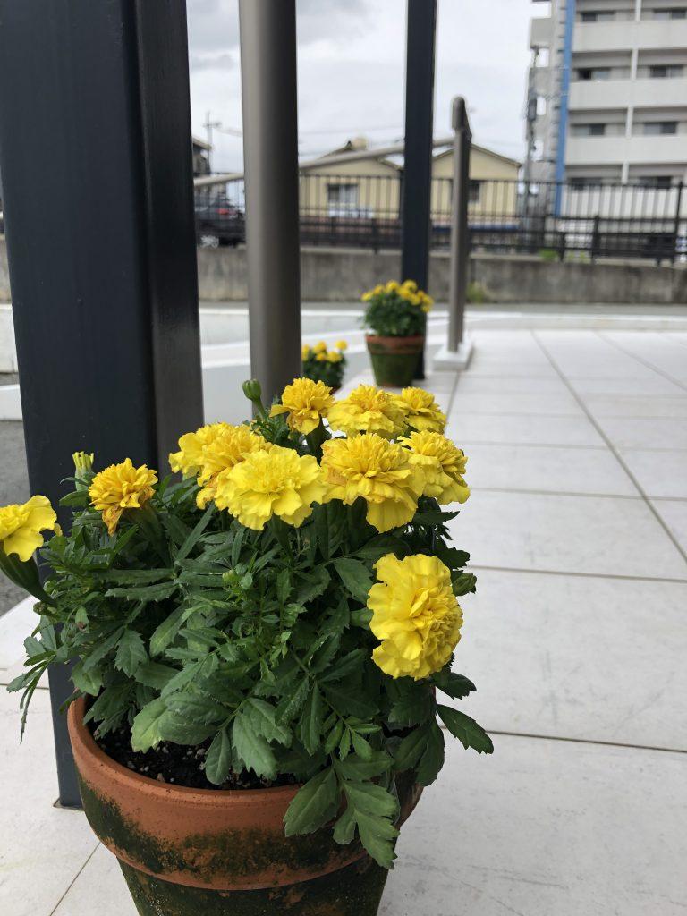 【長嶺南グラッセ】お花が新しく♪