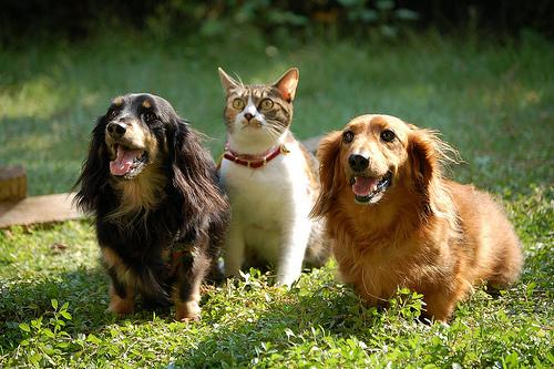 【香椎駅前グラッセ】ペットと一緒に新生活を送りませんか??