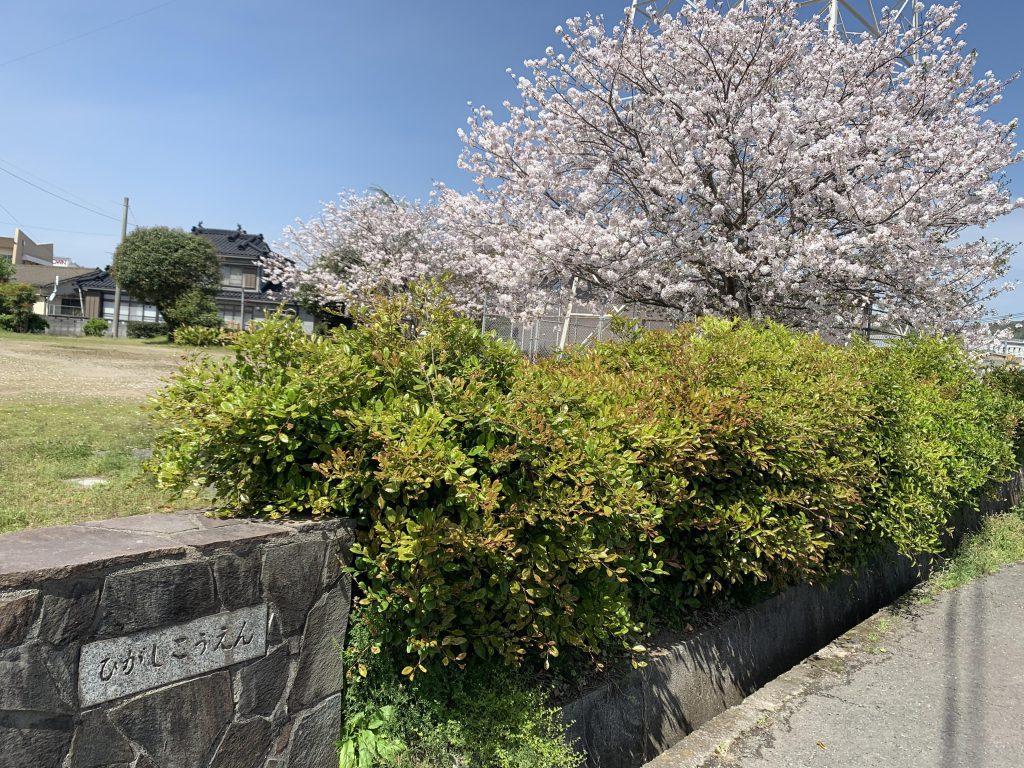 【姶良グラッセ】桜の日~宮島東公園~