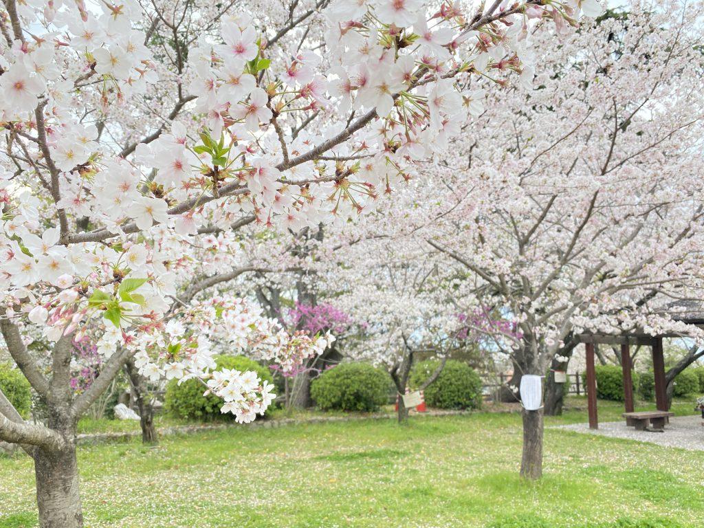 【不知火レジデンス】~春の訪れ♪~
