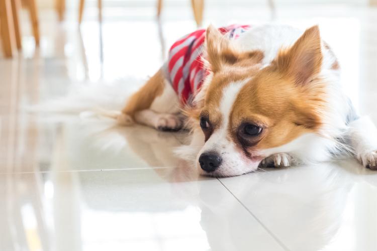 【不知火レジデンス】新生活もペットと一緒に生活できます!